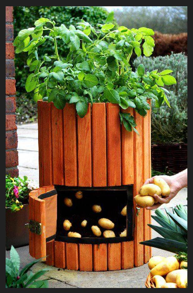 Potato Barrel Planter Instructions