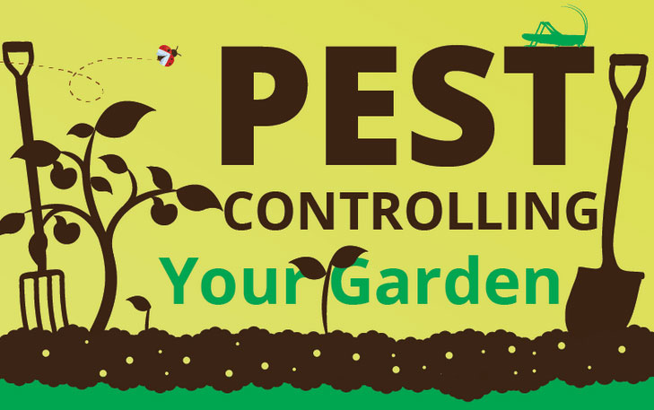 Secret Tips To Maintain A Completely Pest Free Garden