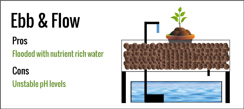 Hydroponics Ebb and Flow