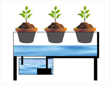 Homemade hydroponic systems - Garden and Seeds | Sustainability