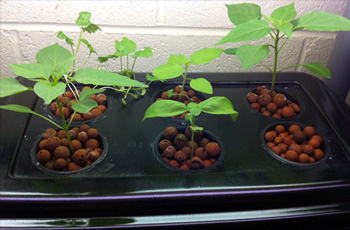How to make a Hydroponics System at Home