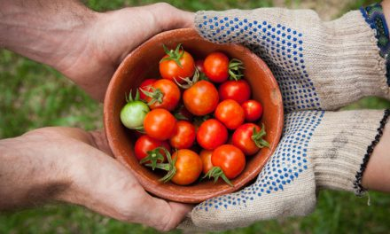 What I Learned from Growing Tomatoes in Different Soils This Year