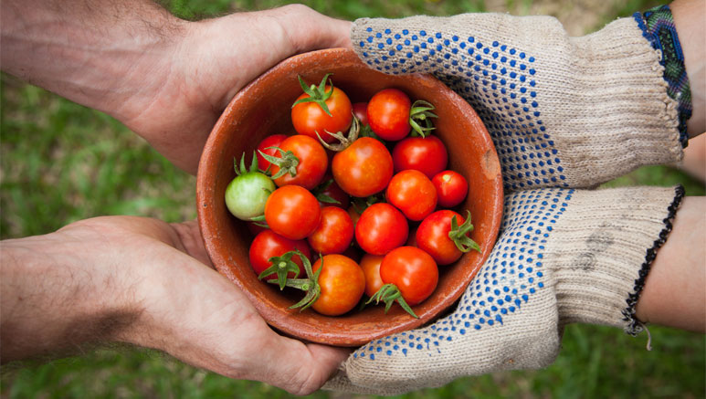 GROWING-TOMATOES-IN-DIFFERENT-SOILS